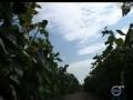 专家谈农事油葵 (882播放)