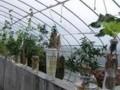 水培养殖生长视频 (1418播放)