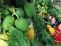 水果栽培技术 (974播放)