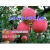 15763356555销售山东日照红富士苹果