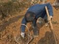 三叶青种植基地 (2502播放)