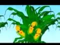 多株玉米种植 (1248播放)