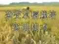 杂交水稻种植技术 (3394播放)