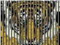 反腐方向:继续打老虎也要监督打虎者