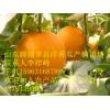 莘县现已大量各种洋香瓜大量上市