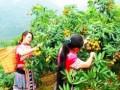 屏边大力开发乡村旅游产业