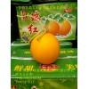 常年供应莘县各种洋香瓜