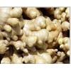 玉溪市新平兰姜种植户