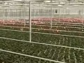 为仙客来种植者定制的物流系统