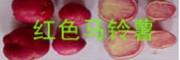 云南广汇种植有限公司