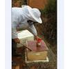 药材花蜂蜜