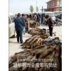 昌黎貉子狐狸养殖基地
