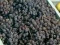 葡萄的贮藏保鲜_三农网