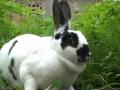 种植套养兔技术 (1440播放)