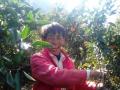 """水果种植----姜棚村村民致富增收的""""摇钱树"""""""