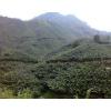 金平县勐桥乡香蕉地转让0871-64155848