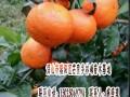 沃柑桔苗哪家好