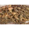 出售黑玛卡、紫玛卡、黄玛卡及部分玛卡种子