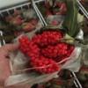 文山砚山县重楼种子供货商,重楼种子批发市场价格,