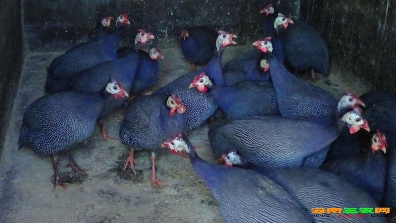 弥勒市乡山奇采特种经济动物养殖基地