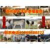 供应肉牛犊、小毛驴、德州驴、鲁西黄牛、西门塔尔牛