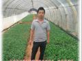 毛景平-培育非洲菊种苗 带富新房村