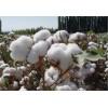 供应50蛋白棉粕