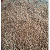 魔芋种子(孔子魔芋)云南厂家批发0871-64155848