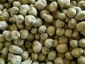 富源孔子魔芋种子,魔芋粉