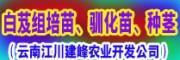 云南江川建峰农业开发公司