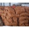 马铃薯原种$ 寻甸微型薯、原种公司