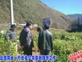 会泽县农业局局长视察突尼斯软籽石榴育苗及鲜果销售 (8)