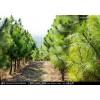 适合林下种养殖/抵押贷款的用材林整体转让