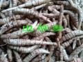 饲料和饲料添加剂生产许可管理办法