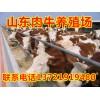 山东肉牛犊养殖场