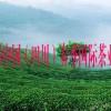 2016第五届中国(四川)春季国际茶业博览会展会