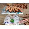 大天门冬种子批发商家|大天门冬种苗价格_和康中草药有限公司产品信息|0878-3871884