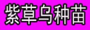 紫草乌种苗'成品