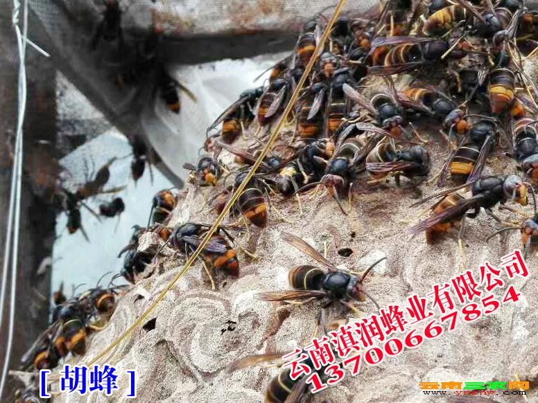 昆明野生动物园蚂蜂