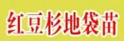  红豆杉地袋苗