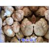 云南优质猴头菇0.11元/克 ——猴头菇供应商家15368019640