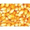 襄阳傲农现代农业常年求购玉米豆粕棉粕麸皮次粉等饲料原料