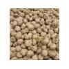 魔芋种子即将上市预售开始_优质代种子,欢迎选购