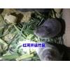 竹鼠多少钱一斤 * 竹鼠价格 * 小香猪猪鼠