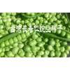 豌豆仁种子快递&豌豆仁种子货到付款13529672528