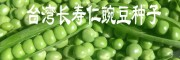 【长寿仁豌豆】