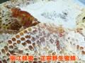 |云南蜂蜜供应|云南蜂蜜|四川蜂蜜价格/野生山蜂蜜