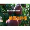 云南美国加州桃苗批发厂家&映霜红桃苗适合海拔多少地方种植%