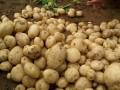 马铃薯产地信息