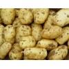 土豆销售渠道| 求购马铃薯| 云南产土豆哪里好